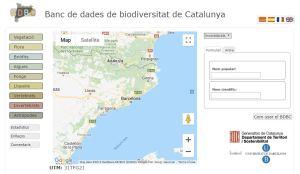 Banc de Dades de la Biodiversitat de Catalunya