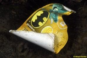 Partacentrotus lividus tapant-se amb una etiqueta de Batman