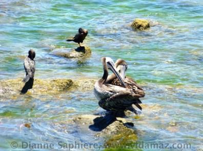 Pelican rest stop