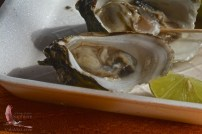 Fresh oysters, pennies each