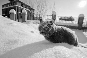 the-world_s-top-10-best-images-of-cats-in-snow3