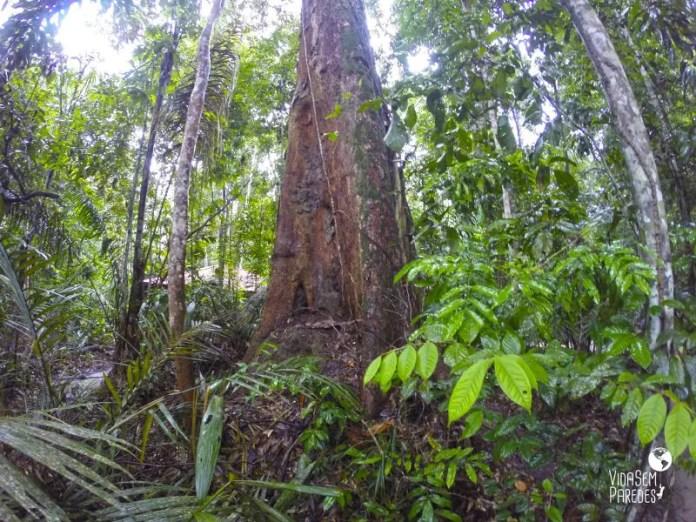 Museu da Amazônia: um enorme Jardim Botânico localizado na Reserva Florestal Adolpho Ducke