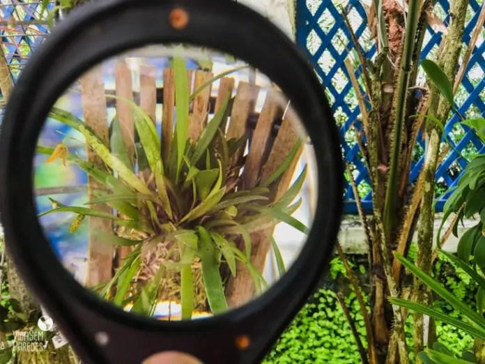 o que fazer no jardim botanico rj