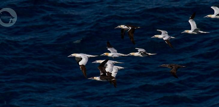 Red de avistamiento de aves y mamíferos marinos