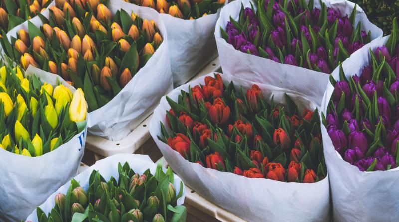 Flores Premium: dinos qué estado de ánimo tienes hoy y te diremos qué ramo de flores necesitas en tu hogar