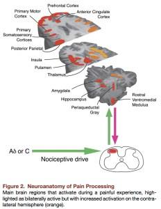 Brain Pain_Tracy Mantyh Neuron 2007