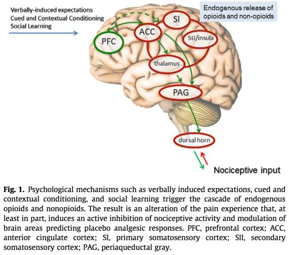 Fra Collago et al. 2013: Pain