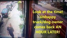 شاهد بالفيديو.. لصوص ينقذون كلبا خلال سرقة لاب توب من سيارة