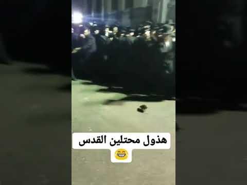 بالفيديو.. فأر يثير حالة هلع بين جمع لليهود في القدس
