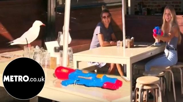 بالفيديو – مطعم يقدّم لزبائنه مسدس ماء ليبعدوا طيور النورس سارقة الطعام