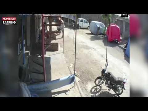 بالفيديو.. القرود تنشر الرعب في قرية هندية
