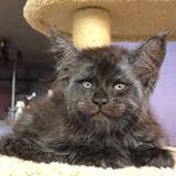 بالفيديو: قطٌّ يثير الرّعب.. بملامحه البشريّة!