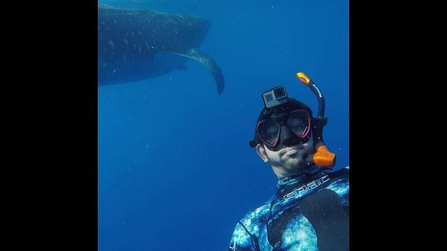 بالفيديو… ولي عهد دبي بين أسماك القرش المفترسة