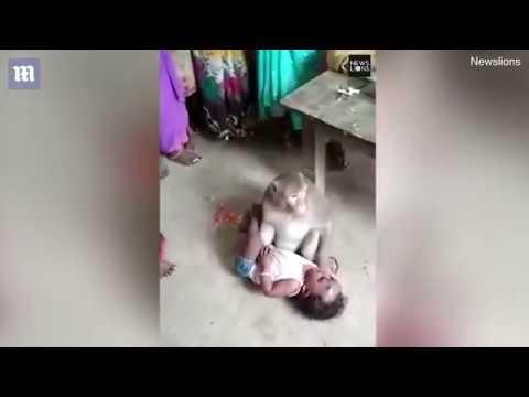قرد يخطف طفلا من والديه ويهدد من يقترب منه !