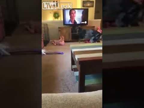 كلب يتسبب في موجة ضحك هتسيرية لطفلة