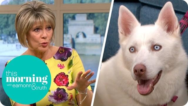 كلب يحرج صاحبته في بث مباشر
