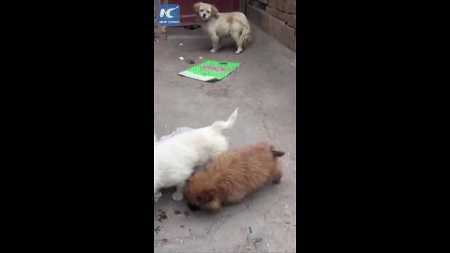 فيديو مؤثر… ماذا فعل كلب صغير مع أمه الجائعة