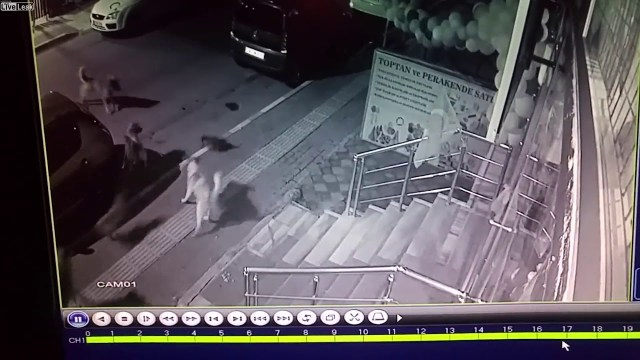 شاهد ماذا فعلت قطة بستة كلاب