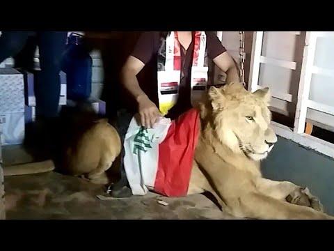 """متظاهر عراقي يستعين بـ"""" أسد """" للدفاع عن المتظاهرين من الكلاب البوليسية !"""