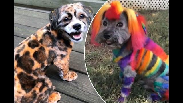 كيف تحول كلبك إلى نمر؟
