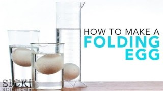 How to Make a Folding Egg – Sick Science! #121