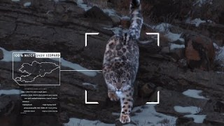 Microsoft + Snow Leopard Trust: Protecting A Threatened Species
