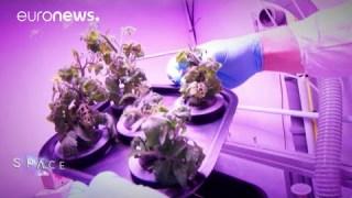 ESA Euronews: Coltivare cibo nello Spazio