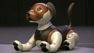 Aibo SONY robot dog favorite pet for children and adults with artificial intelligence
