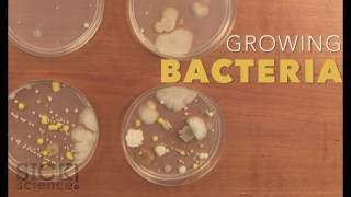 Growing Bacteria - Sick Science! #210