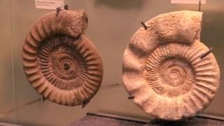 Wissensmix: Was sind Fossilien?