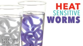 Heat Sensitive Worms – Sick Science! #212