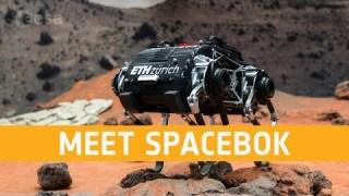Meet SpaceBok