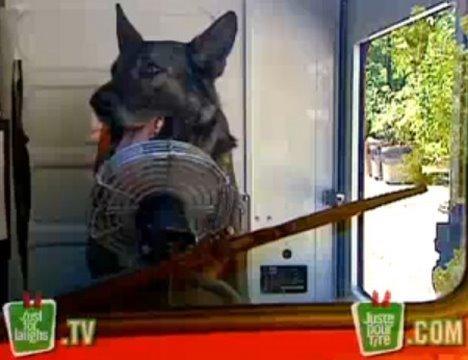 Driving Dog Prank – JustForLaughs.com