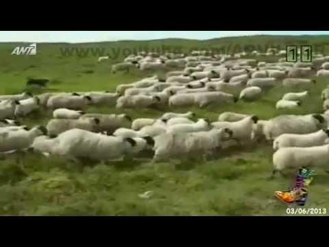 ΡΑΔΙΟ ΑΡΒΥΛΑ – Μηνύματα συμπαράστασης για να μην κλείσει η ΕΡΤ / 03-06-2013