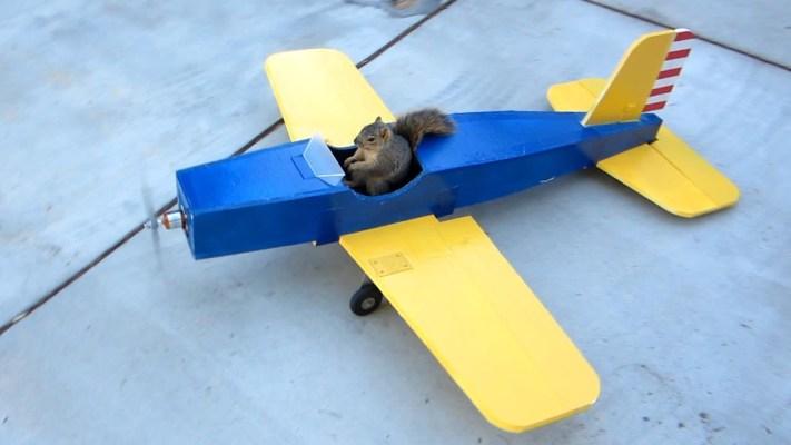 Squirrel Steals Airplane!