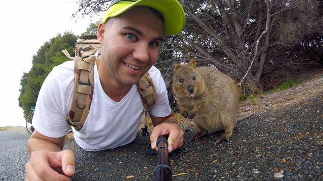 Quokkaly Cool!  Meet The Quokka  One News Page Video