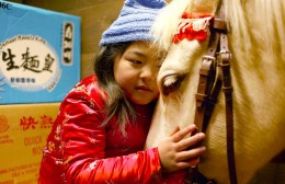 Le cheval de Saint-Nicolas - Mischa Kamp