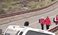 Tourists Chased By Black Bear at Yellowstone