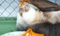 Sloth Only Cares About Carrots