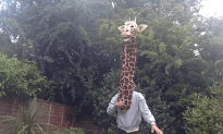 Just A Giraffe Singing Some Marvin Gaye