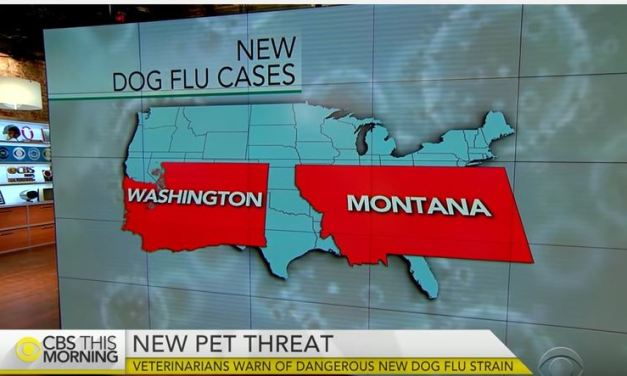 Vets Warn of Dangerous New Dog Flu Strain