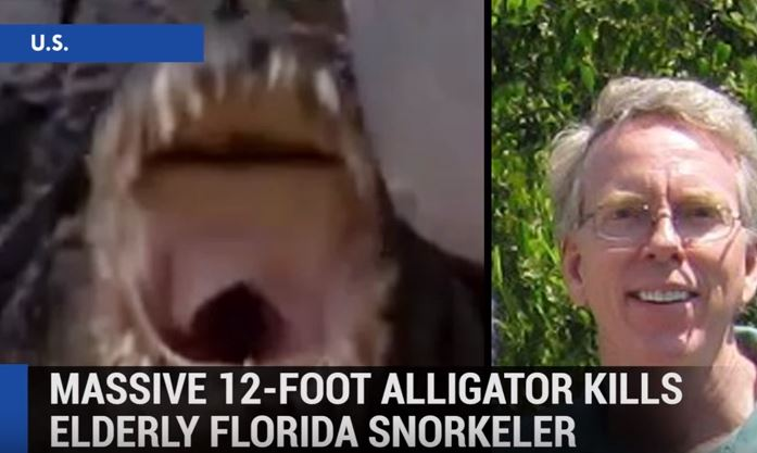 12-Foot Alligator Kills Florida Snorkeler