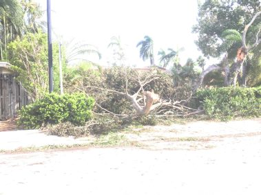 Hurricane Irma Tree Down