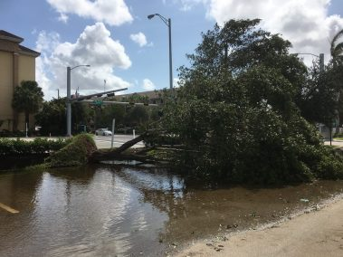 irma dmaage in lauderdale