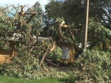 House smashed by tree during hurricane irma