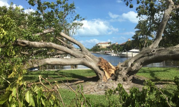 Hurricane Irma Damage Pics – Fort Lauderdale