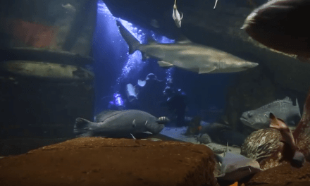 The Long Island Aquarium
