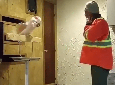 Parrot Curses Out Its Owner