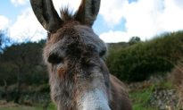 Man Caught Having Sex With A Donkey Claims It Used To Be A Hooker