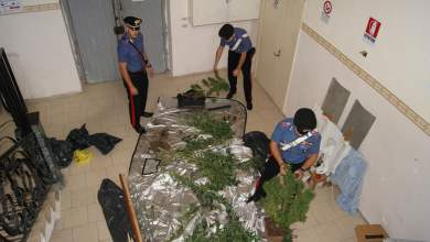 Photo of Giugliano in Campania – Coltivavano cannabis indica nelle loro abitazioni: arrestati dai carabinieri due giovani incensurati